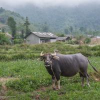 Northern Vietnam road trip: Yen Minh to Hoang Su Phi