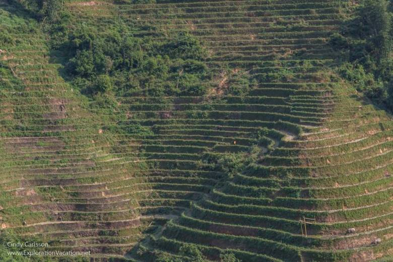 terraces near Sapa Northern Vietnam road trip - ExplorationVacation