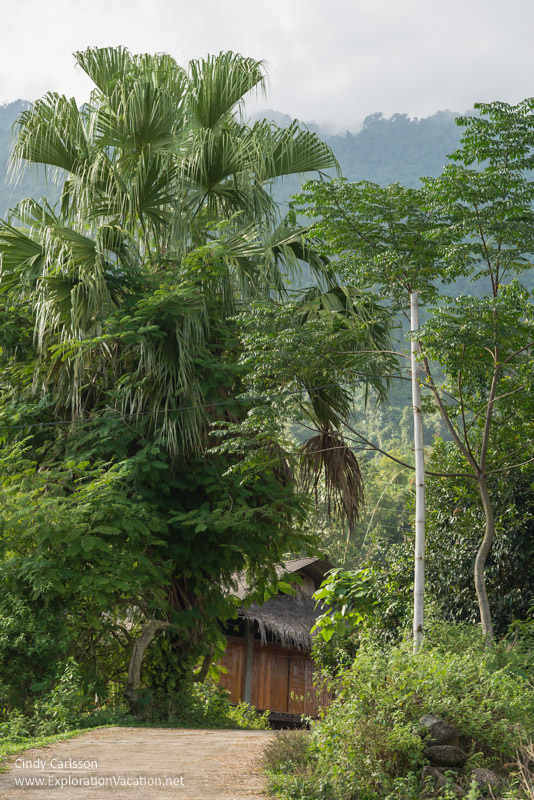 palm village Northern Vietnam road trip - ExplorationVacation