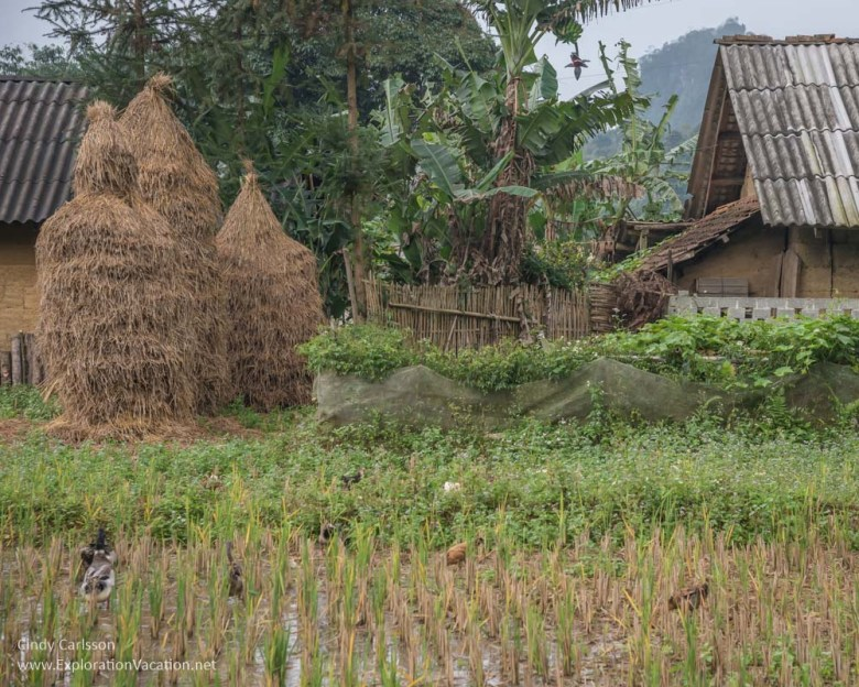 Bo Y village - Northern Vietnam road trip - ExplorationVacation