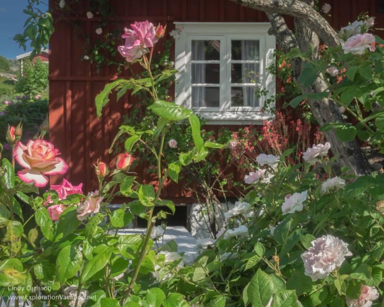 rose garden Landsort Öja Island Sweden - www.ExplorationVacation.net