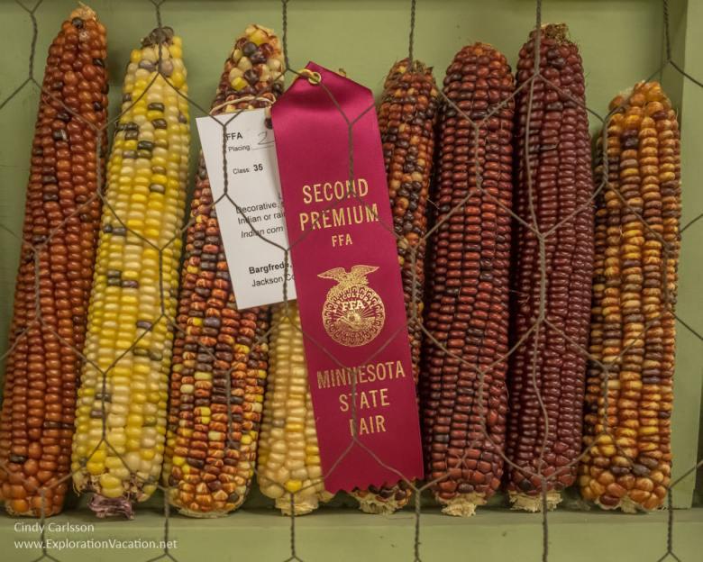 Corn at the MInnesota State Fair - www.ExplorationVacation.net