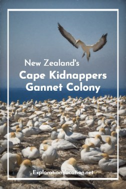 New Zealand's Cape Kidnappers tractor tour offers gannets, geology, and good fun - ExplorationVacation