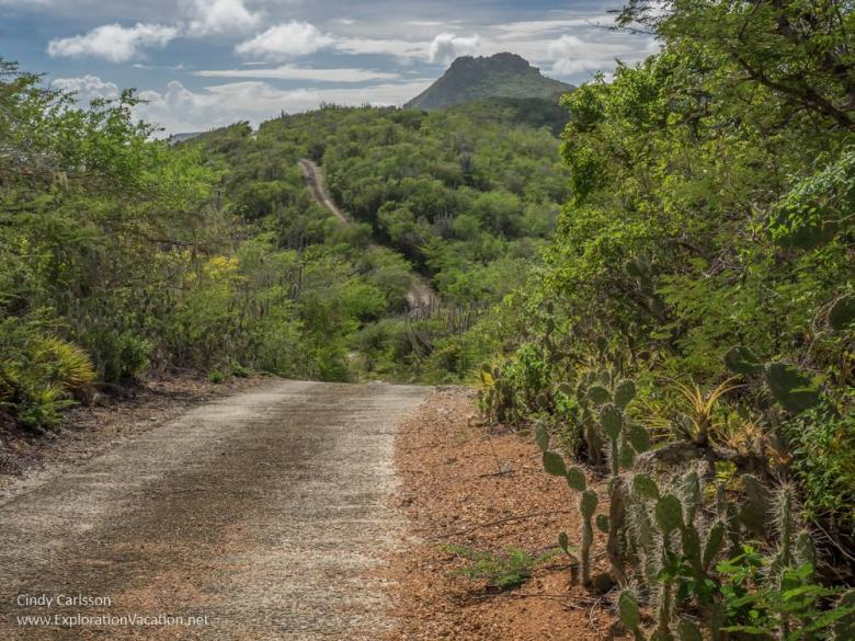 Christoffeberg towers over the Mountain Route in Christoffel National Park Curacao - ExplorationVacation.net