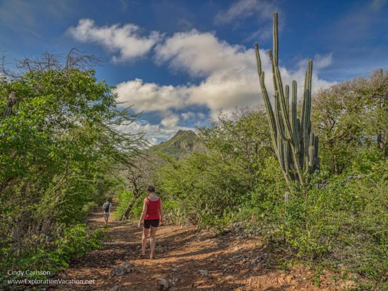 trail to Zorgvlied Ruins in Christoffel National Park Curacao - ExplorationVacation.net