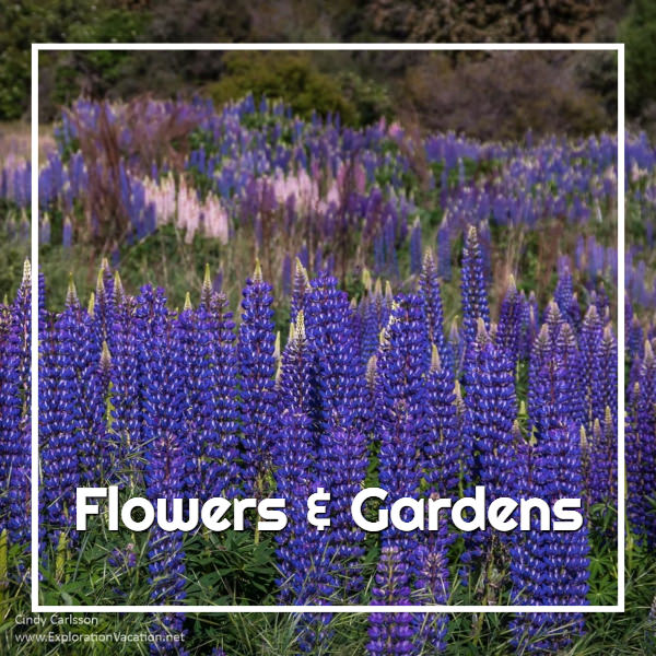 A wonderful world of flowers and gardens - ExplorationVacation