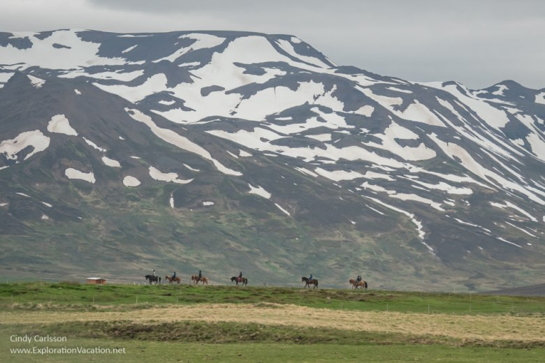 Icelandic horses and riders in front of a large mountain