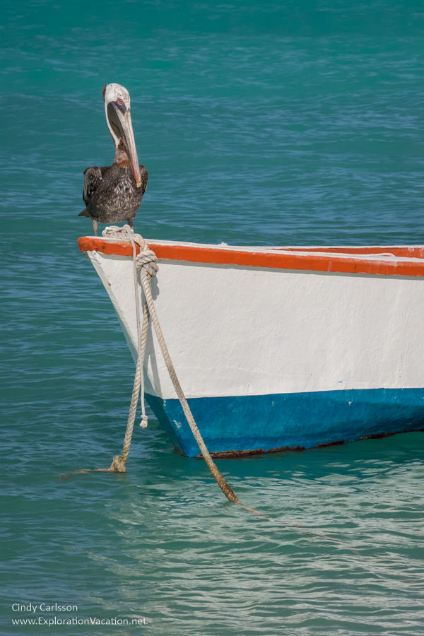 Pelican sitting on a fishing boat