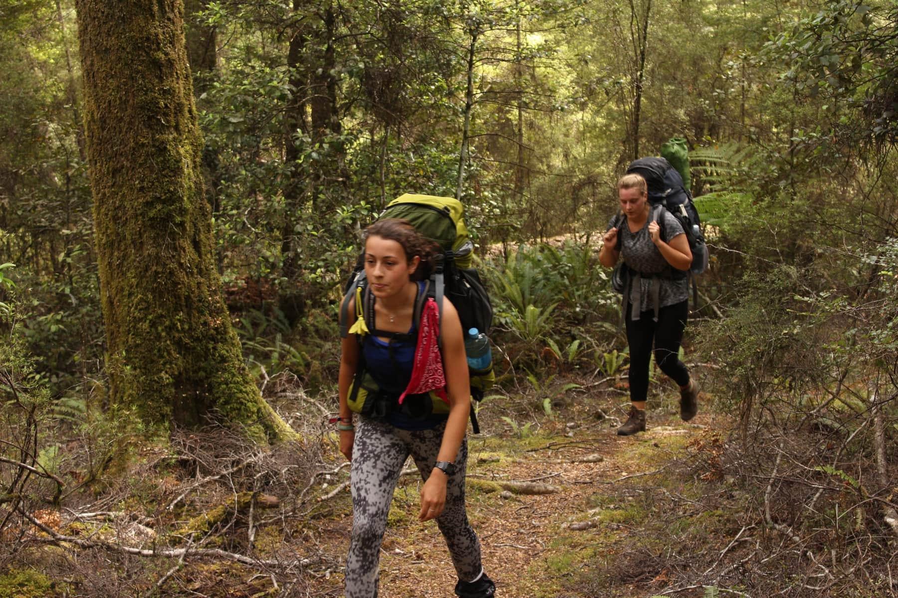 Waldetappe Wandern Te Araroa