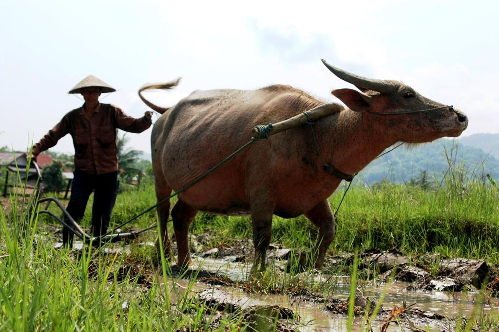 Living Land Farm Laos