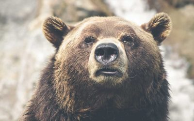 Do I really need bear spray in Yellowstone?