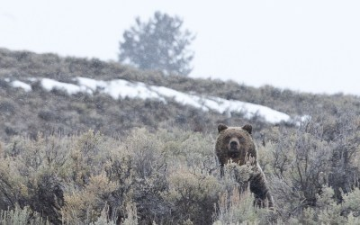 Bear spray encouraged for hunters