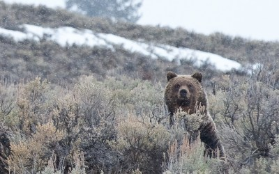 Buying vs. Renting Bear Spray