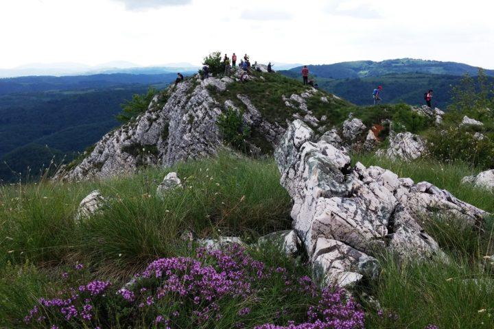 Homoljske planine, top of Zdravac