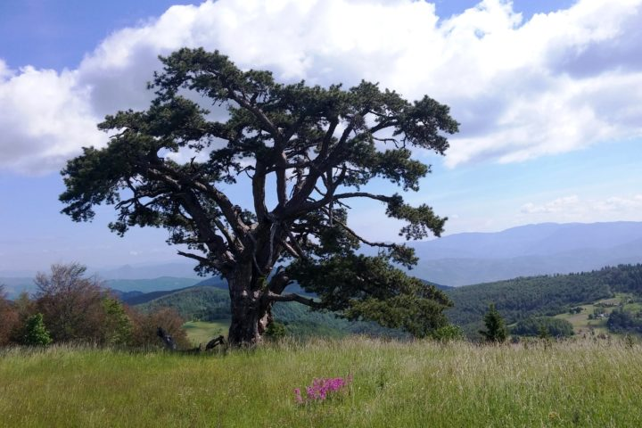 Kamena Gora, Sveti bor