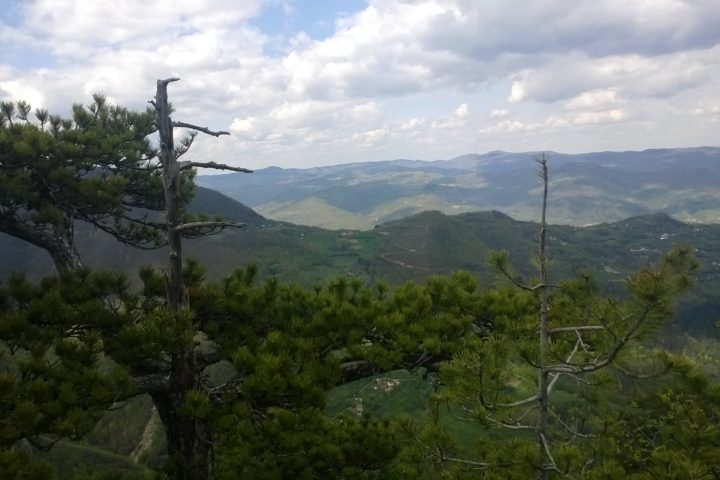 Viewpoint Crnjeskovo, Tara