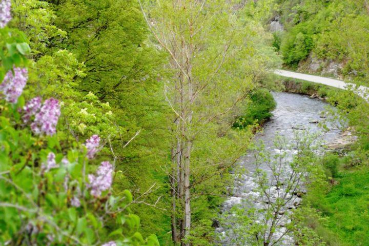 Jelovička reka, Stara planina