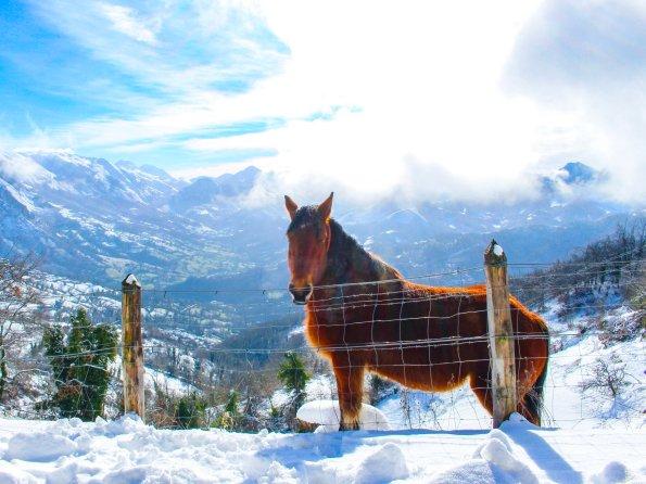 Animals in Asturias