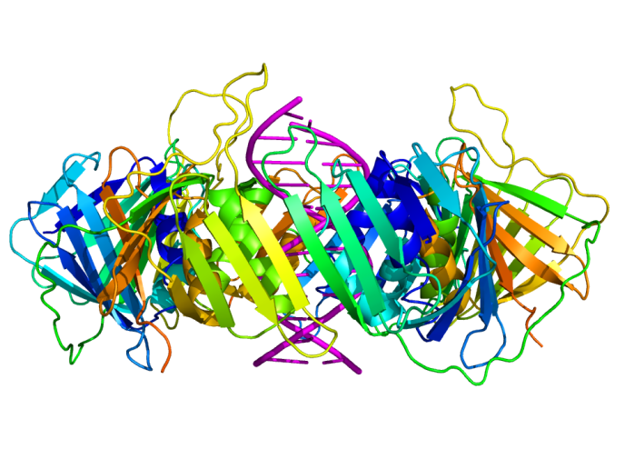 sliding_clamp_dna_complex_side