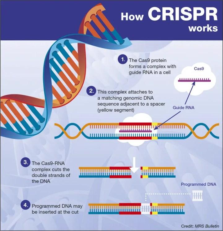 How Crispr works