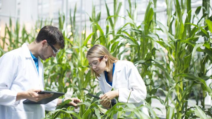 applications of biotechnology in agriculture
