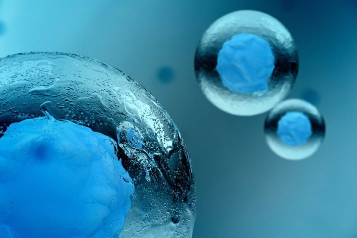 Stem Cell Facts