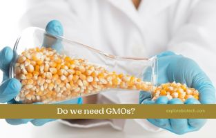 Do we need GMOs to Feed the World?