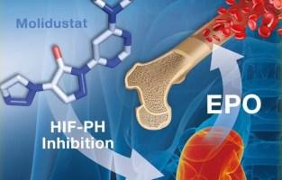 hif-ph inhibitor