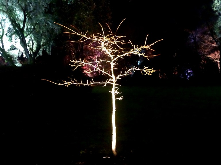 Trelissick Illuminations 2018