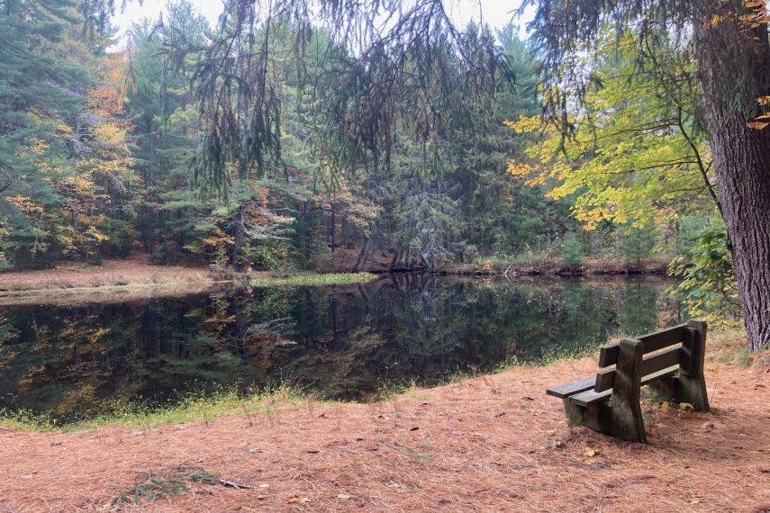 Belding WMA Pond