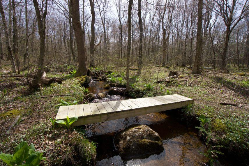Cohen Woodlands Blue Trail