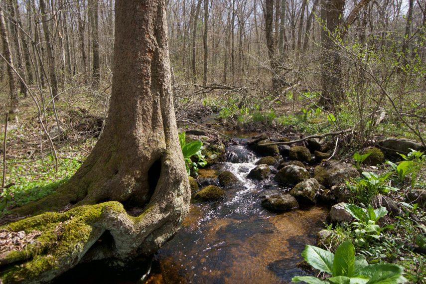 Cohen Woodlands Cabin Brook