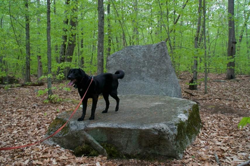 Sawmill Brook Preserve Rock