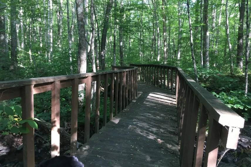 Shelter Falls Trail