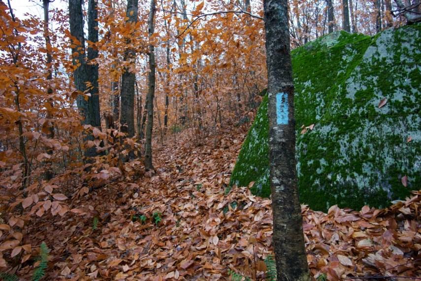 Shenipsit Trailview