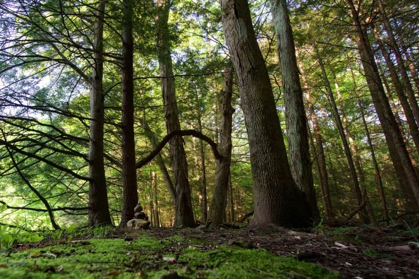 Torrey Preserve Trail East