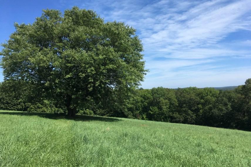 Knowlton Hill Overlook
