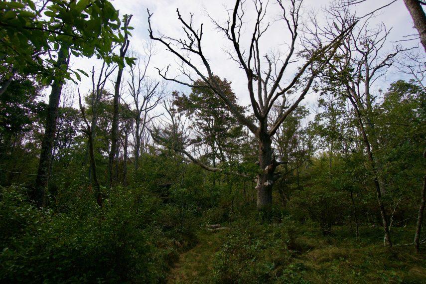 Salem Riverside Tree