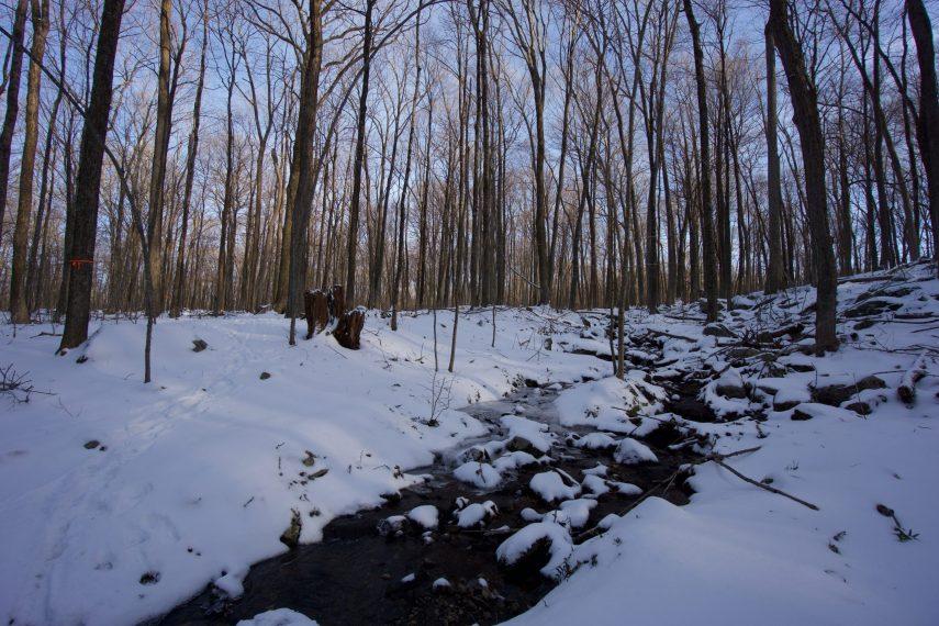 Toomey Clark Trail