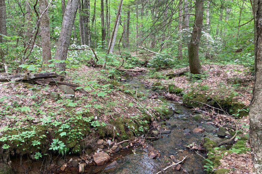 Bear Den Paine Hill Nipmuck State Forest