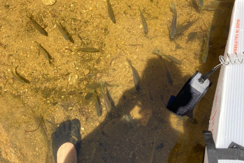 Halls Pond Fish