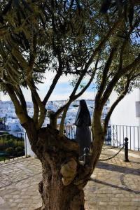 La encobijada olivo Vejer de la Frontera pueblo blanco white village Cadiz Explore la Tierra