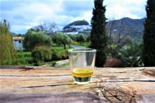 Olive oil tour tasting in white village Zahara de la Sierra Cadiz