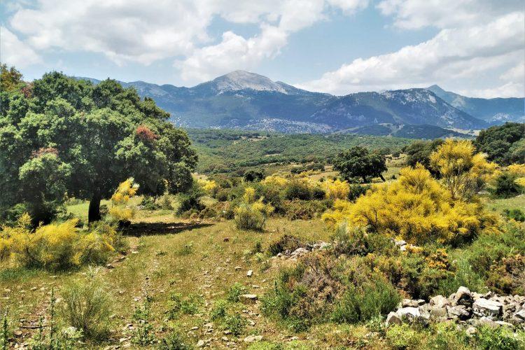 walking in Andalucia Mediterranean forest Dehesa Holm oak Grazalema natural park Cadiz Andalucia