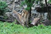 Rezervația și Grădina Zoologică Gârboavele