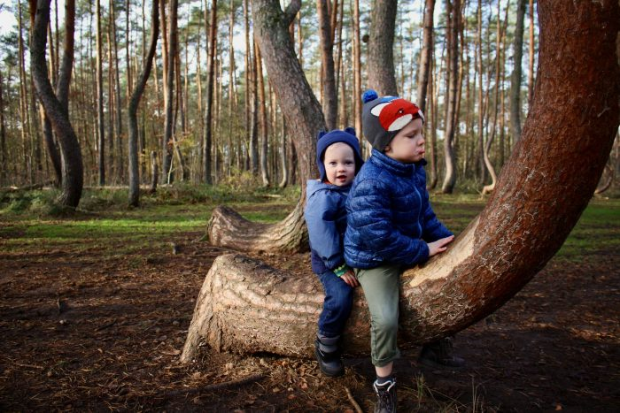 Boys play horsey ride on a crooked tree