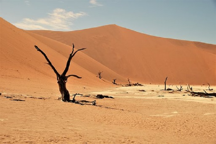 Miracle plants in the Namib Desert of Africa