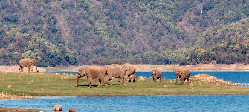 can reach Rajaji National Park
