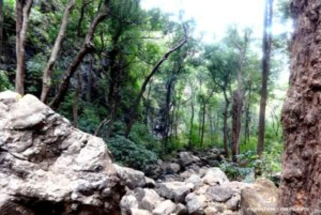 forest in Pachmarhi town
