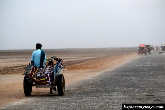 Horse cart in white desert